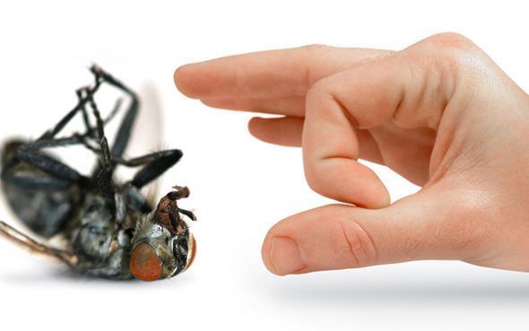 C mo ahuyentar las moscas venelog a - Como espantar moscas ...
