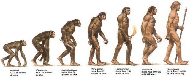 Resultado de imagen para grafica evolucion hombre