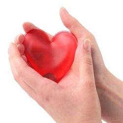 El Corazón Maquinaria Del Organismo Venelogía