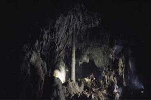 Salón del Chaguaramo. Cueva Alfredo Jahn. Estado Miranda