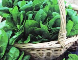 Beneficios y propiedades de la espinaca venelog a for Espinacas como cocinarlas
